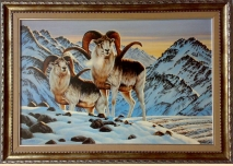 Mountain sheep - 1