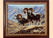 Mountain sheep - 3