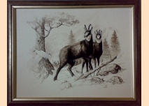 Chamois - painting